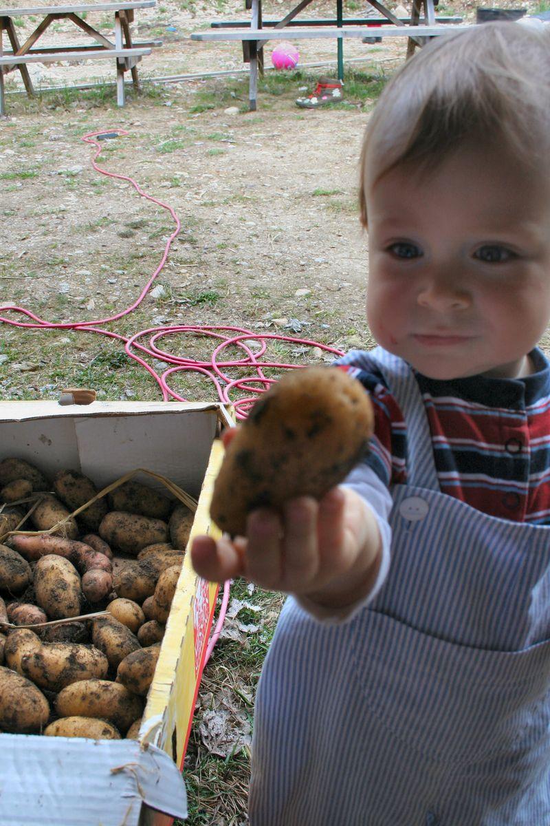 Littlepotato