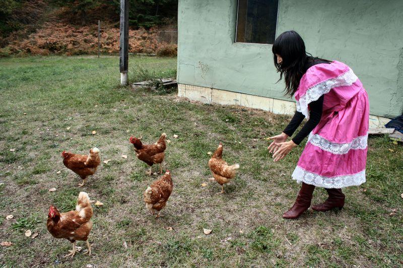 Chickenlady