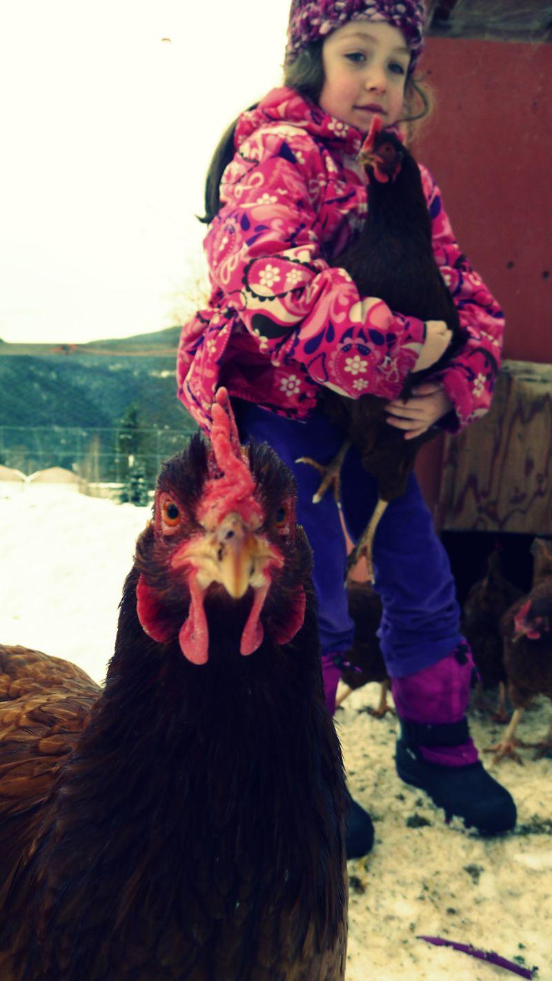 Chickenlickin2